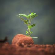 Avviare la propria startup senza finanziamenti esterni